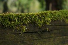 Mossa på ett staket arkivfoton