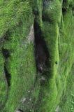 Mossa på förstörda väggar på vaten Phou i Champasak royaltyfria bilder