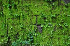 Mossa på förstörda väggar på vaten Phou i Champasak royaltyfri foto
