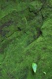 Mossa på förstörda väggar på vaten Phou i Champasak arkivbild
