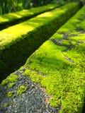 Mossa på gångbanan Fotografering för Bildbyråer