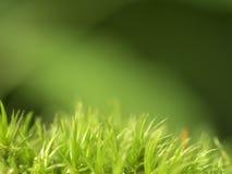 Mossa på grön bakgrund Arkivbilder