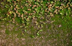 Mossa på jordningen Royaltyfri Fotografi