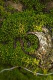 Mossa på körsbärsrött träd Arkivbild