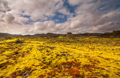 Mossa på lava Royaltyfri Fotografi