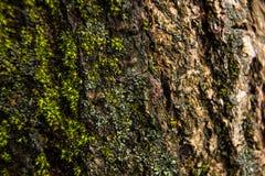 Mossa på skället av en trädmakro Arkivbilder