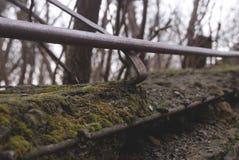 Mossa på stenar i staden arkivfoton