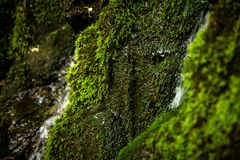 Mossa på stenarna av en vattenfall i skogen royaltyfri bild