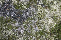 Mossa på stenarna Liggande med en sten i vattnet Royaltyfria Foton