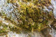 Mossa på stencloseupen Royaltyfri Bild