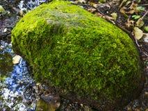 Mossa på stenen Arkivbild
