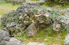 Mossa på stenen i höst Arkivfoto