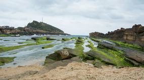 Mossa på stenig kust i bred sikt Royaltyfri Fotografi