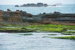 Mossa på stenig kust på närbild Royaltyfri Bild