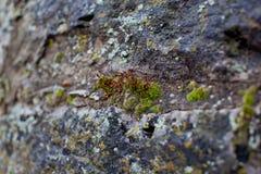 Mossa på stenväggen Arkivfoto