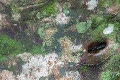 Mossa på trä Royaltyfri Fotografi