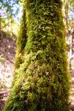Mossa på träd Fotografering för Bildbyråer