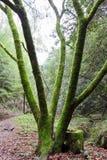 Mossa på träd Royaltyfria Foton