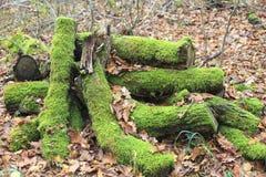 Mossa på träd i skogen i höst Arkivfoton
