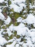 Mossa på trädbakgrund Arkivfoton