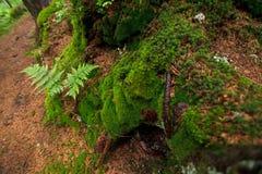 Mossa på träden i skogen Royaltyfri Fotografi
