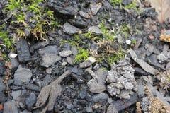 Mossa på trädgårds- jord Arkivbild
