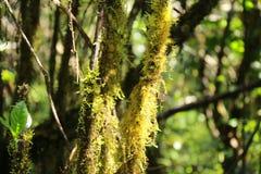 Mossa på trädskäll Arkivfoton