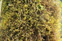 Mossa på trädskäll Royaltyfri Fotografi