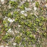 Mossa på trädskäll Arkivbild