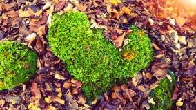 Mossa som formas som hjärta royaltyfri bild