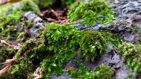 Mossa som växer över, vaggar royaltyfri bild