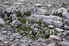 Mossa som växer i, vaggar i Antarktis royaltyfria bilder
