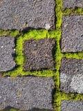 Mossa som växer mellan gråa tegelplattor arkivbilder