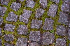 Mossa som växer mellan kullersten som skjutas från över arkivfoto