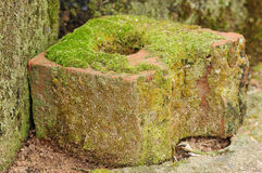 Mossa som växer på en tegelsten Arkivbilder