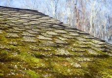 Mossa som växer på hussinglar Arkivfoto