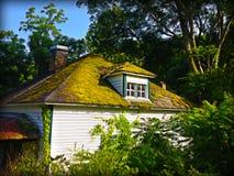 Mossa täckt övergett hus arkivfoton