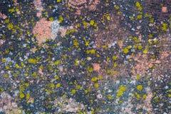 Mossa-täckt gammal betongvägg arkivfoto