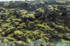 Mossa täckt lava vaggar Arkivfoto