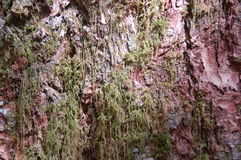 Mossa täckt skäll i Snoqualmie nedgångar Arkivfoto