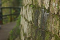 Mossa-täckt vägg Arkivbilder