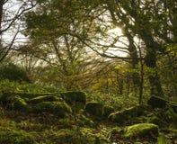 Mossa täckte stenar i höstträden Arkivbilder