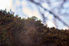 Mossa täckte trä Närbild arkivbilder