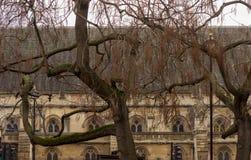 Mossa täckte träd står utanför den brittiska parlamentbyggnaden i London, England royaltyfri bild
