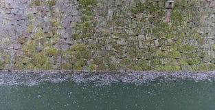 Mossa täckte väggar och vallgraven som sparades med stupade Sakura sidor Arkivbild