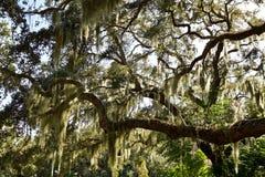 Mossa till och med en grupp av träd royaltyfria foton