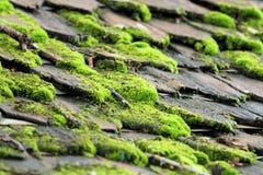 Mossa växer i fuktiga ställen Arkivfoto