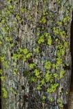 Mossa växer på norrsidan av ett träd Arkivbild