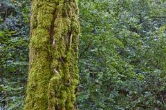 Mossadetalj på en inloggning en grön skog royaltyfri foto
