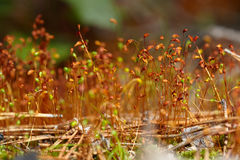 Mossafrö i askarna Arkivfoton